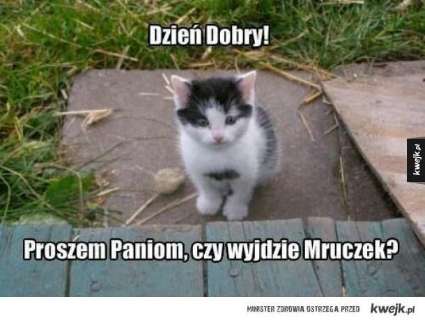 Problemy młodych kotów