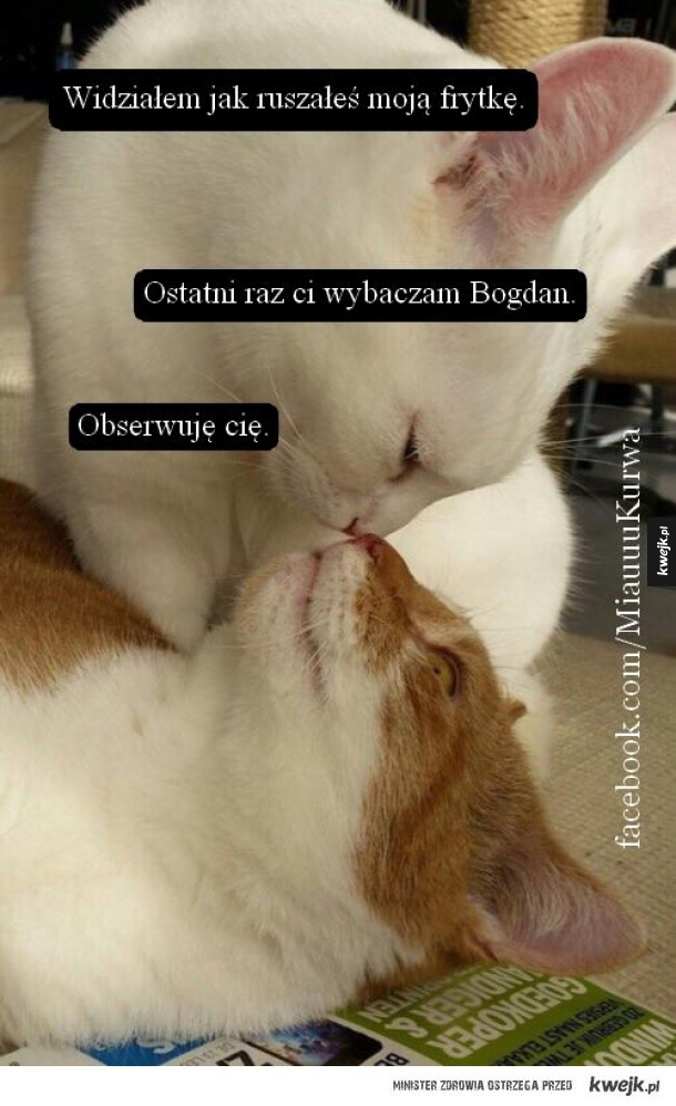 Bogdan!