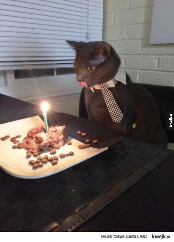 Romantyczna kolacja z kotem