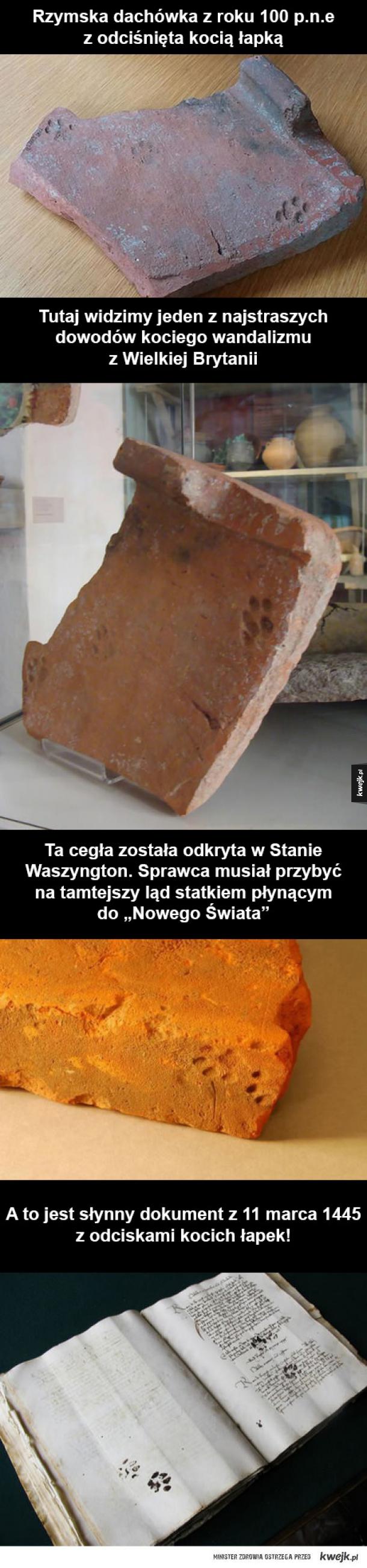 Najstarsze dowody kociego wandalizmu