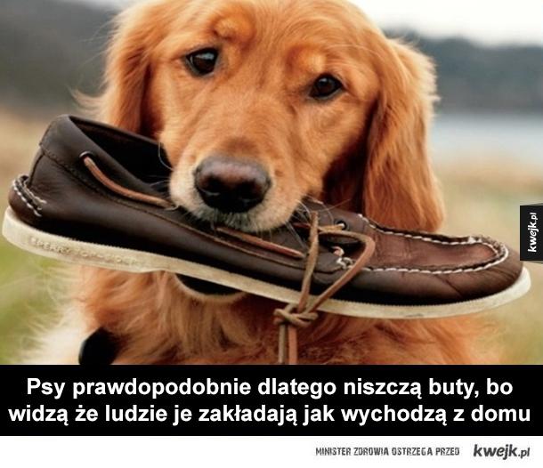 Myśli prysznicowe - leonardo dicaprio, pies, striptizerka, buty, kobieta, kibel