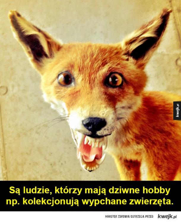 Najgorzej wypchane zwierzęta na świecie. - Są ludzie, którzy mają dziwne hobby  np. kolekcjonują wypchane zwierzęta.