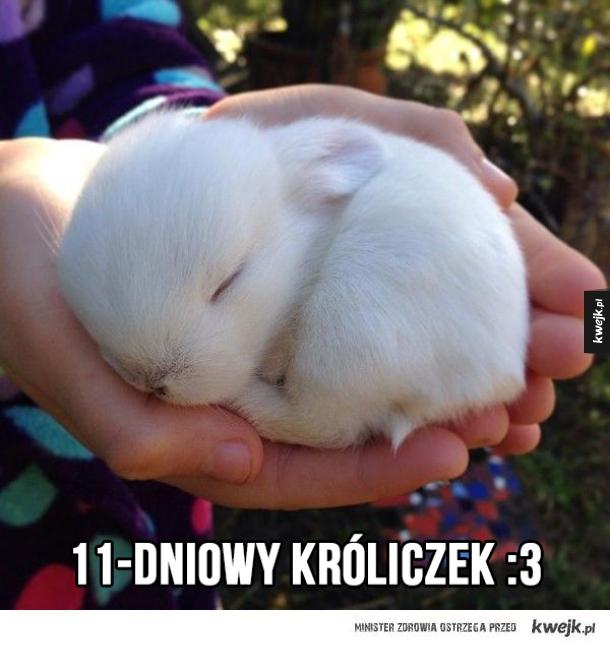 Kuleczka