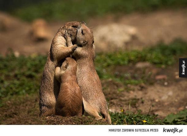 Rodzicielska miłość