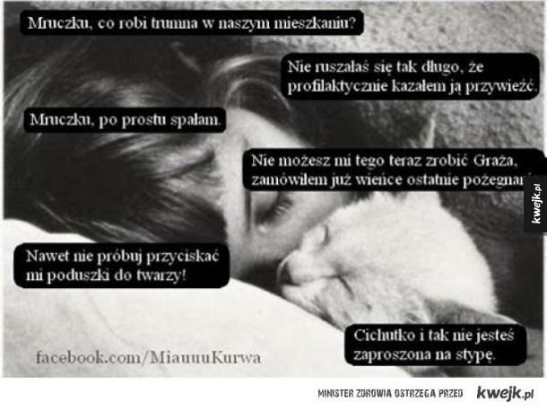 Kochany koteł