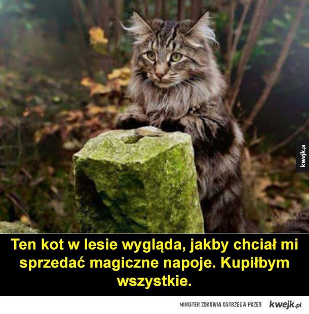 Kot Łizard