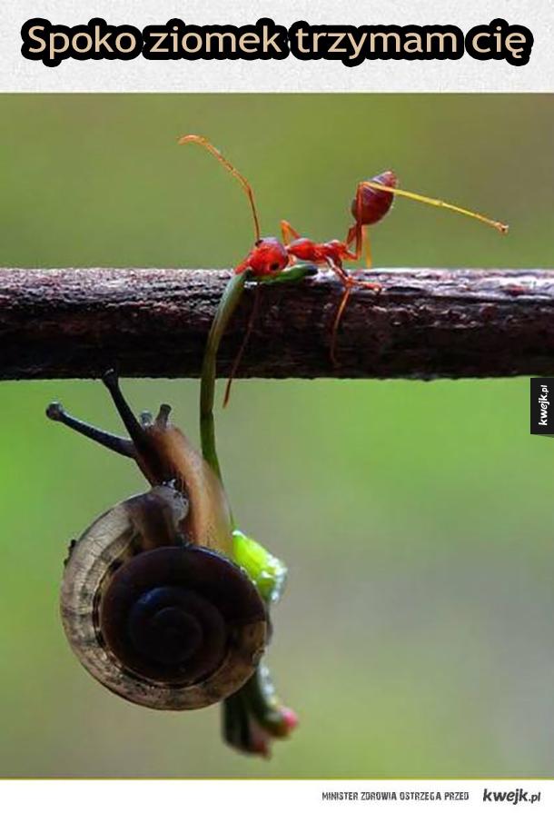 Dobry ziomek mrówka