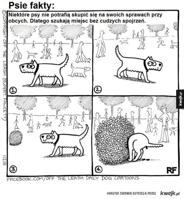 Psie fakty