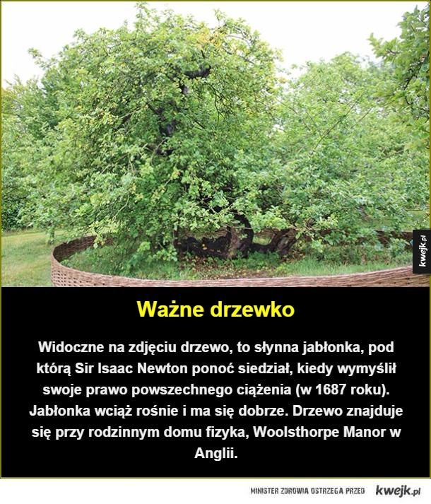Być może najsłynniejsza jabłonka świata - Ważne drzewko. Widoczne na zdjęciu drzewo, to słynna jabłonka, pod którą Sir Isaac Newton ponoć siedział, kiedy wymyślił swoje prawo powszechnego ciążenia (w 1687 roku). Jabłonka wciąż rośnie i ma się dobrze. Drzewo znajduje się przy rodzinnym domu fizyka,