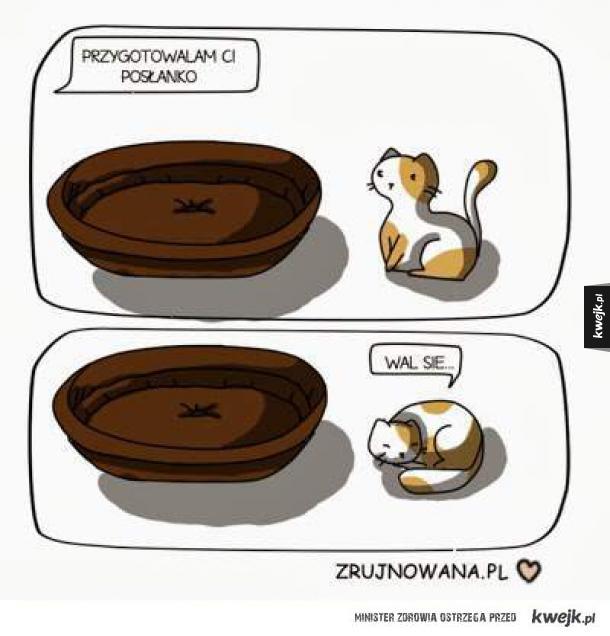 koty po prostu