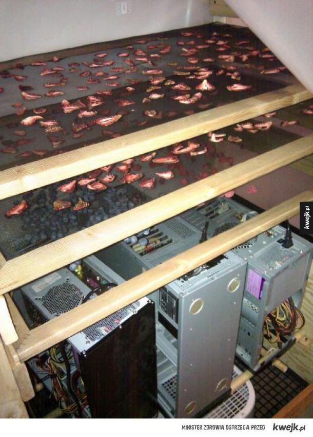 wykorzystywanie komputera do suszenia owoców