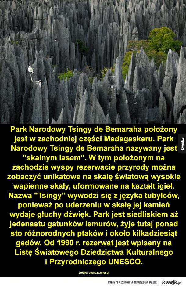 Skalny las z Madagaskaru - skały, madagaskar, wyspa, afryka, wapno, wspinaczka, lemur, małpa
