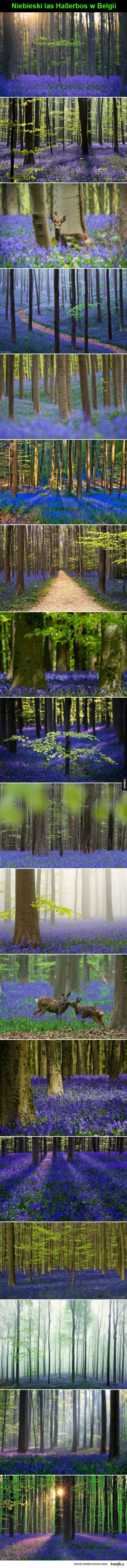 Dzwoneczkowy las