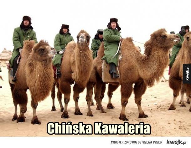 Kawaleria