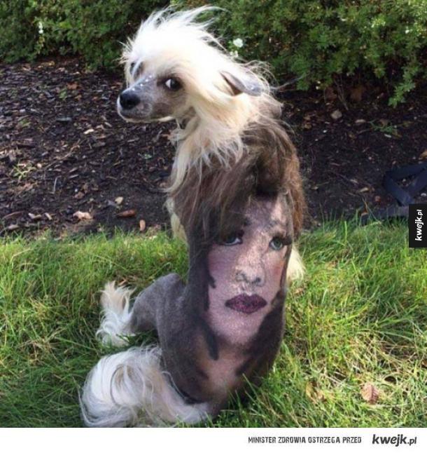 Biedny psiak