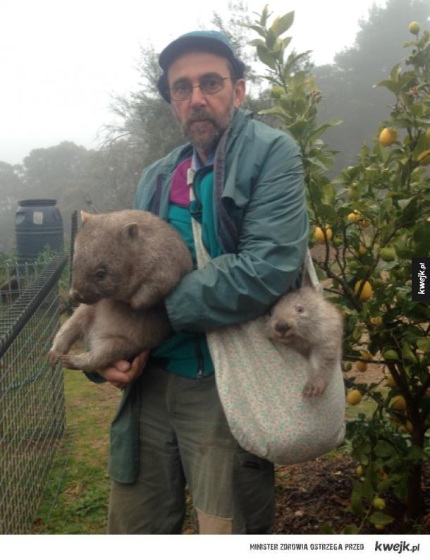 Takie tam z wombatami