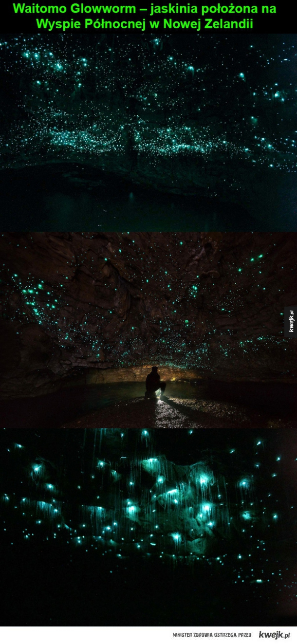 Waitomo Glowworm