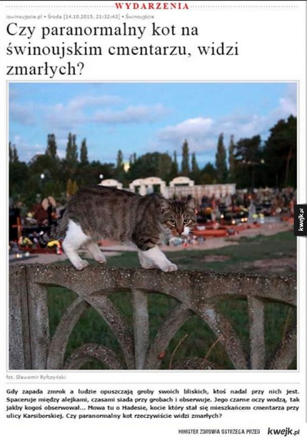Paranormalny kot