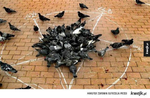 Ostateczny dowód, że gołębie są narzędziem szatana