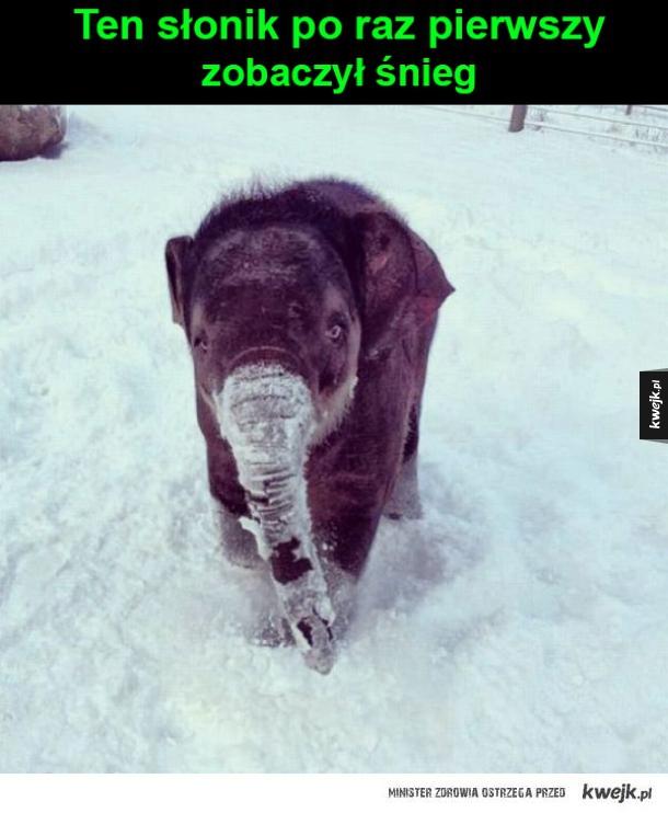 Młody słonik