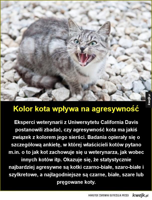 Kolor kota wpływa na agresywność. Eksperci weterynarii z Uniwersytetu California Davis postanowili zbadać, czy agresywność kota ma jakiś związek z kolorem jego sierści. Badania opierały się o szczegółową ankietę, w której właścicieli kotów pytano m.in. o t