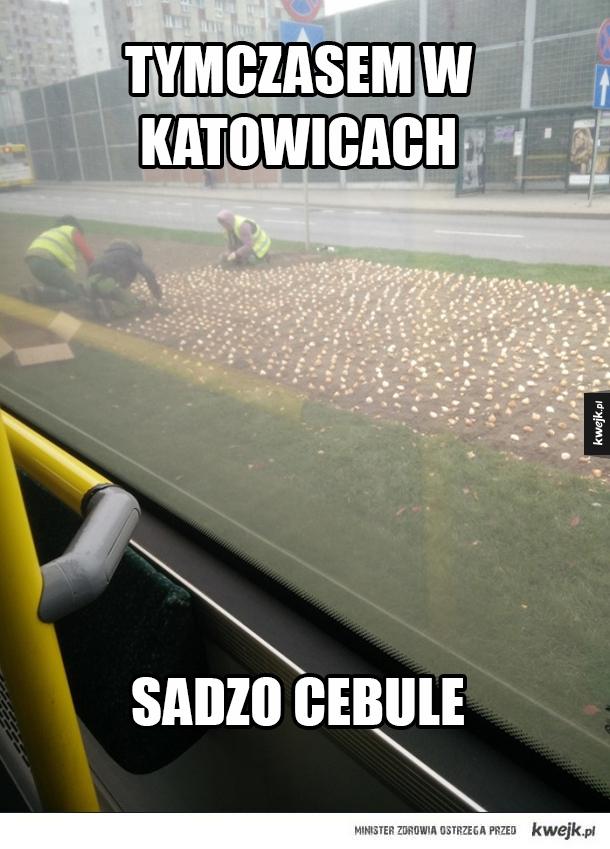 W Katowicach