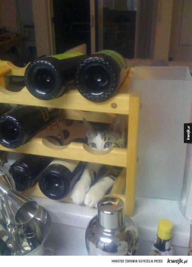Kot udaje, że jest winem