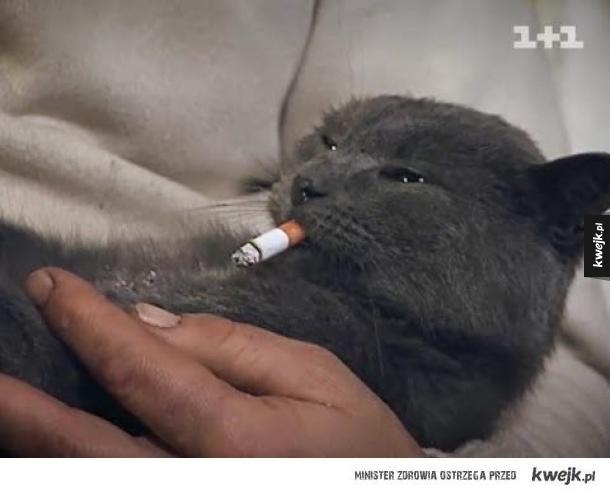Kot jara fajkę