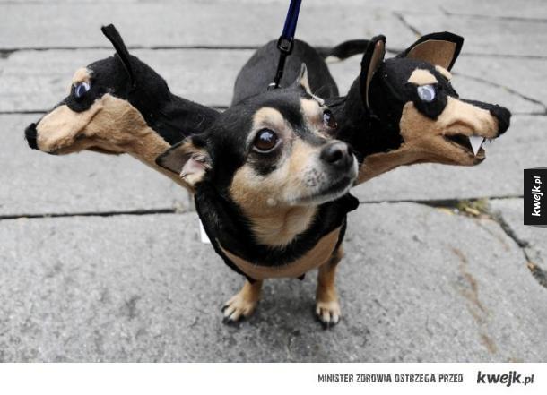 Halloweenowe kostiumy dla zwierząt