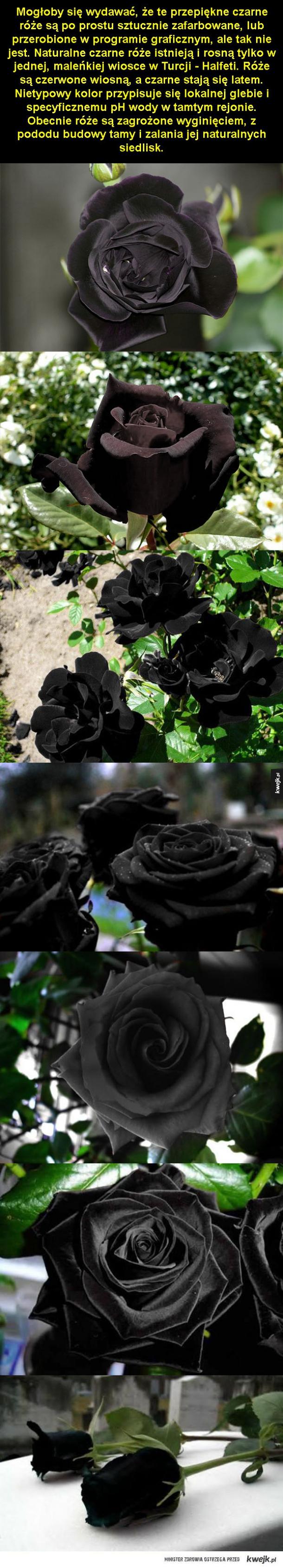 Bardzo rzadki kwiat