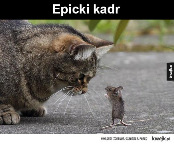 Mysz i kot