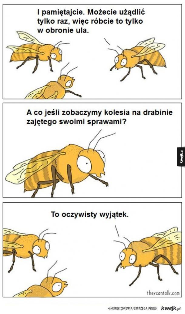 Typowe pszczoły