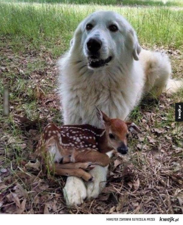 Mama Bambi.