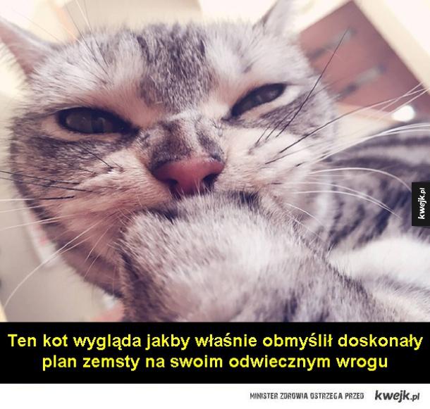 Wredny kot