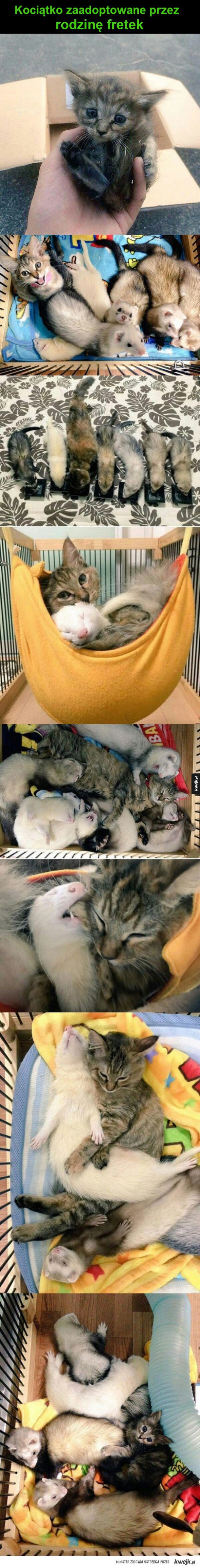 Zaadoptowany kociak