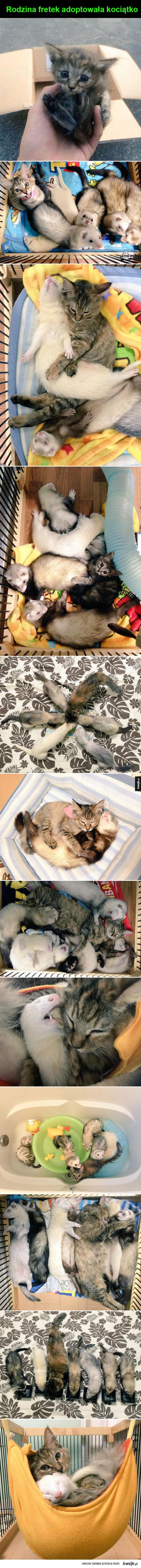 Adoptowanie kociątka
