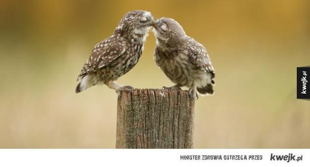 Zwierzakowe love