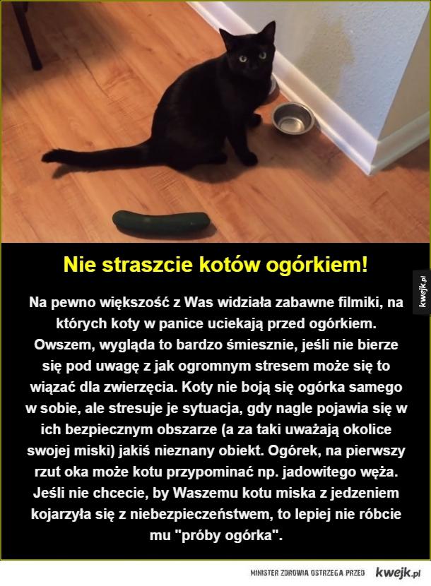Biedne koty - Nie straszcie kotów ogórkiem!. Na pewno większość z Was widziała zabawne filmiki, na których koty w panice uciekają przed ogórkiem. Owszem, wygląda to bardzo śmiesznie, jeśli nie bierze się pod uwagę z jak ogromnym stresem może się to wiązać dla zwierzęcia