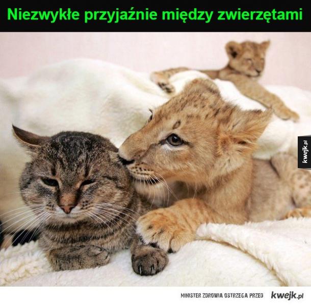 przyjaźnie między zwierzętami
