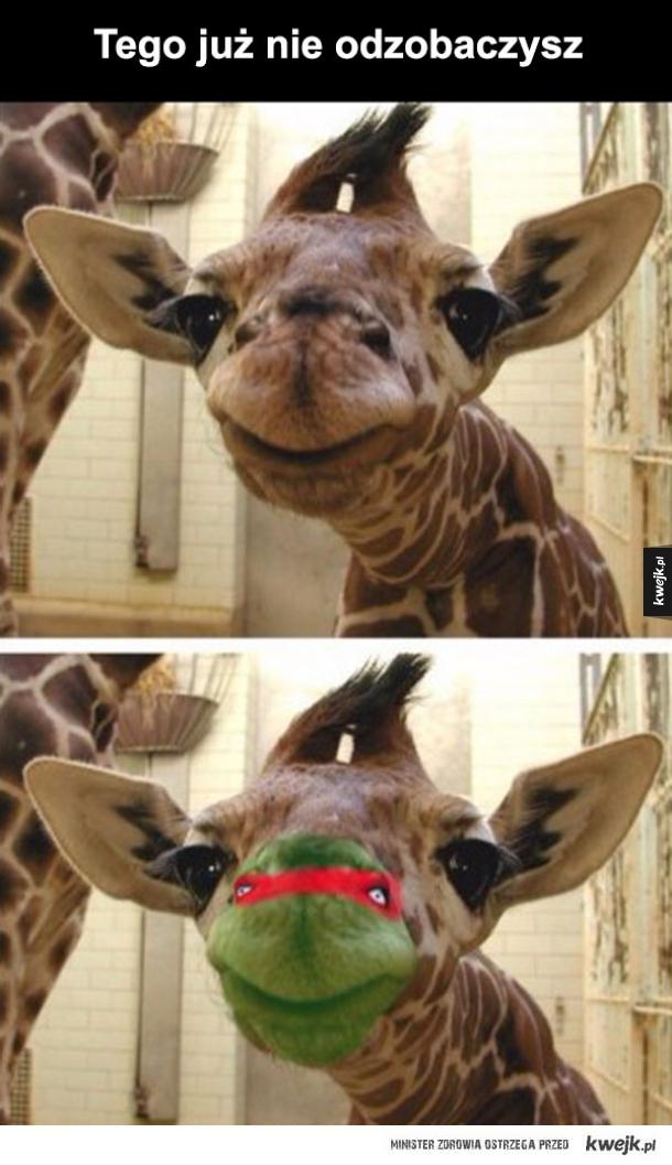 Już nigdy normalnie nie spojrzę na żyrafę
