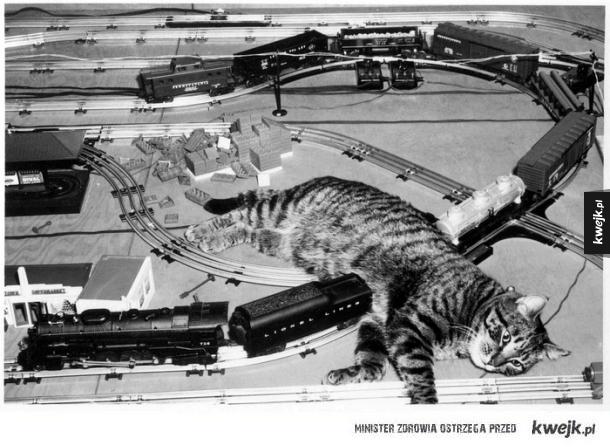 Koty to podłe stworzenia