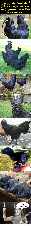 Gotycki kurczak