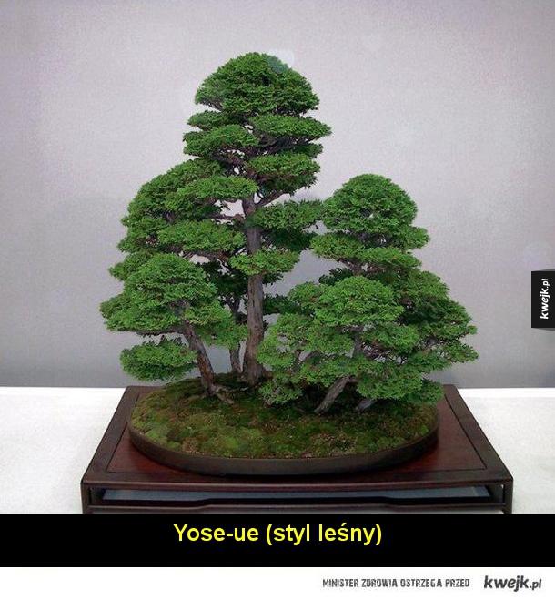 Podstawowe style bonsai