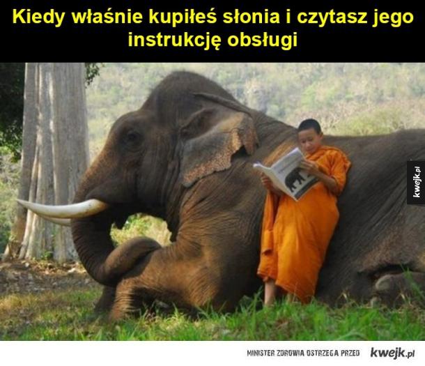Kiedy kupiłeś słonia