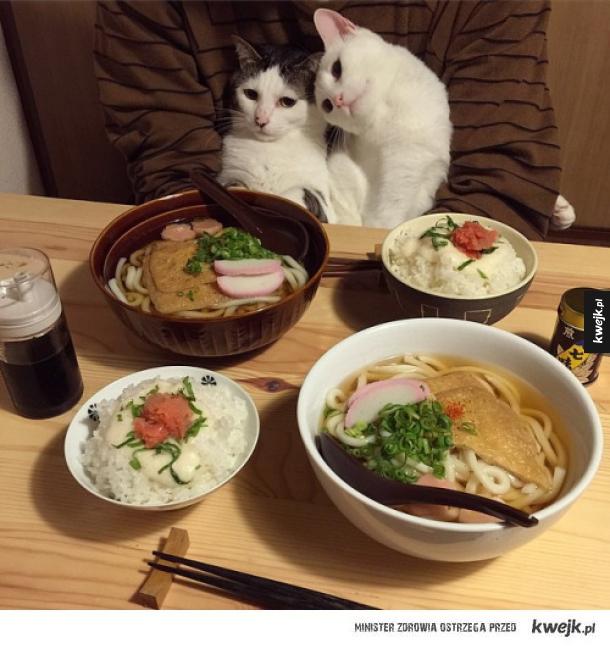 Obiad z kotami