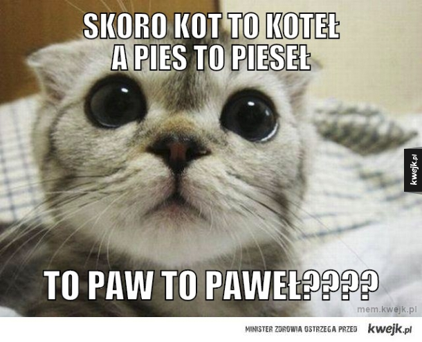 Skoro Kot To Koteł A Pies To Pieseł Ministerstwo śmiesznych