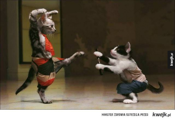 Koty kung fu