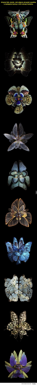 Kwiaty z motylich skrzydeł