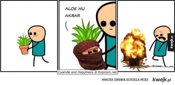 Aloes terrorysta