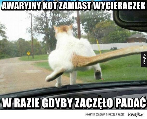 Awaryjny kot